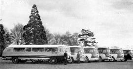 A fleet of White Line tour buses.