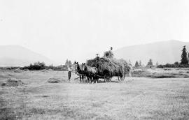 Haying On A Farm Near Alberni