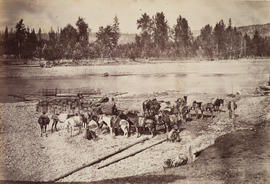 Pack train, Quesnelle River