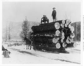 Chase. Adams River Lumber Co. Hauling Logs By Sleigh