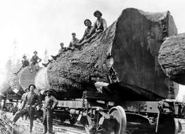 A And L Logging Co. Loggers