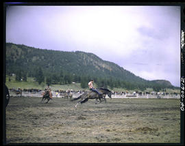 Williams Lake Stampede Bronc Riding
