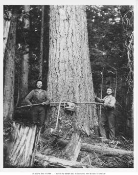 Loggers From Holding Lumber Co. Adams Lake