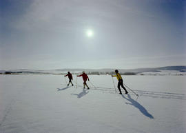 Cross Country Skiing Near McBride