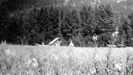 Artillery Farm, Pemberton Meadows; oat field