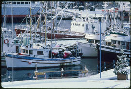Commercial Fish Boats And Inner Harbour Victoria
