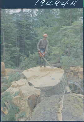 Tree Feller, South Bay, Queen Charlotte Islands