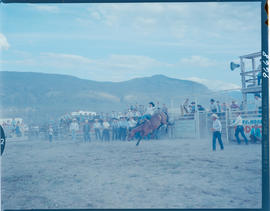 Ashcroft Rodeo, Bronc Riding