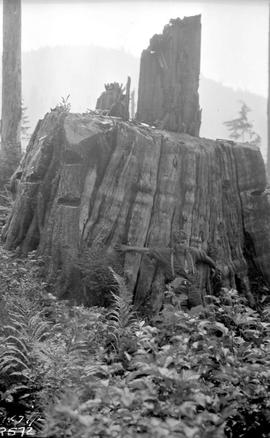 Burned And Logged Land Capilano Valley