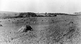 """A grain field near Vanderhoof on the Nechacko River""."