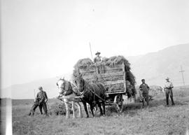 """Alfalfa hay at Mr. Stowell's place, Mr. Lawrence and son, Elliott, on the load""."