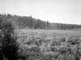 A big meadow seen near Camp 3, Township 14, photographed during  the Nechako survey of 1908.