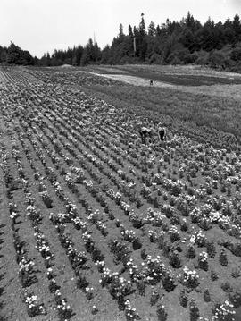 Flower Seed Farm, Saanich
