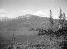 A timber island in a meadow, at the head of the southwest fork of the Copper River.