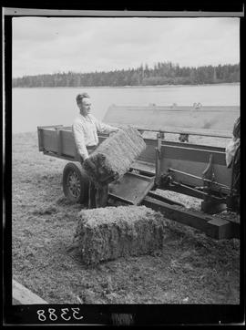 Baling Peat Moss At Port Clements Queen Charlotte Islands
