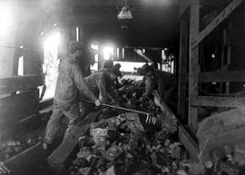 Sorting coal by miners of...