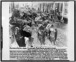 Cataline's Pack Train On The Main Street In Barkerville