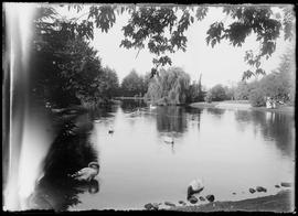 [Beacon Hill duck pond]