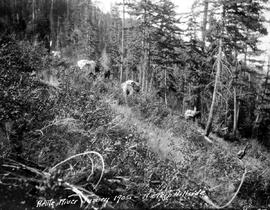 """Kettle River Survey - 1905 - a steep hillside."""