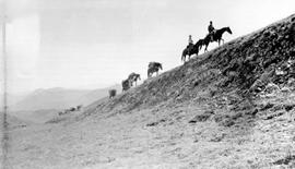 Bedaux expedition; pack train on Cariboo Summit.