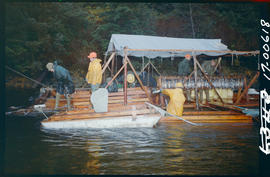 Stripping float for pink salmon on Bear River