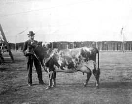 E. A. Wells with one of his show cows, Willows Exhibition Grounds, Victoria