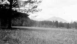 """Wild hay meadow near Clinton, Pacific Great Eastern, 59 Mile House, Cariboo Road""."