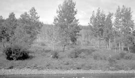 """First class land"" on the Upper Nechako River."