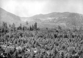 Regeneration Cowichan Lake Logged 1930