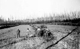 """Clearing land on area no. 5 by the windrow method of piling slashings, southeast of Prince ..."