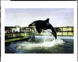 Whale Show At Sealand, Victoria