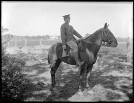 2nd CMR, soldier and horse