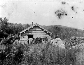 Three horses outside a small cabin surrounded by firewood.