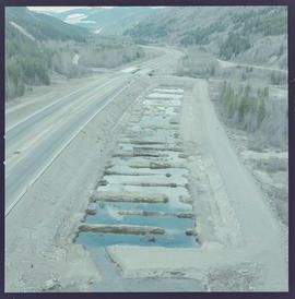 Spawning Beds Near The Coquihalla Highway