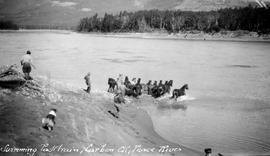"""Swimming pack train, Carbon Creek, Peace River""."