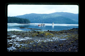 Fishboats At Rose Harbour, Queen Charlotte Islands