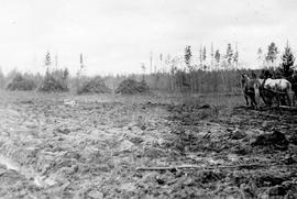 """Slashing, piling, clearing and breaking at Prince George, settlement area, Land Settlement ..."