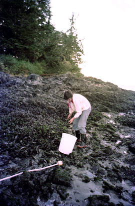 Mussel Picker Clayoquot