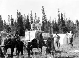 George Powers packing a horse with the help of Entzootsul, Jessie's dog