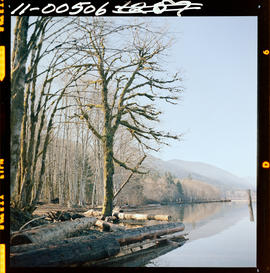 Winter At Lake Cowichan