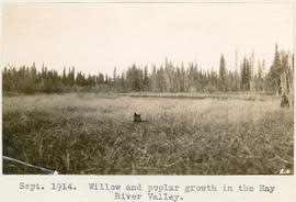 Willow and poplar growth in the Hay River Valley