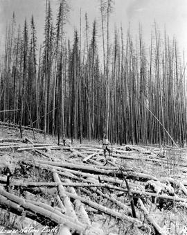 Dead timber at Lower Nation Lake.