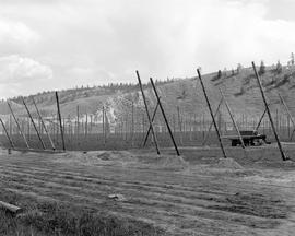 Hop Fields Near Kamloops