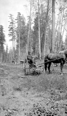 Forest Service; staff member Grevis; in a carriage at Big Qualicum.