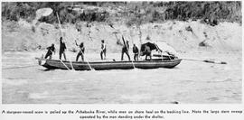"""A sturgeon-nosed scow is poled up the Athabascan River, while men on shore haul the tracking line. Note the large stern-sweep operated by the man standing under the shelter"""