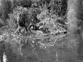 Surveyors taking a sighting from atop a beaver lodge at Chilth-Nuy Lake.