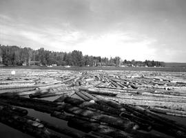 Sawmills At Mill Bay, Babine Lake