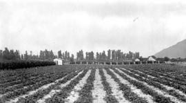 """Lower Fraser Valley strawberry farm at Dewdney, BC."""