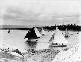 Boat race in the outer harbour; Victoria.