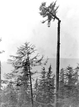 A And L Logging Co. High Rigger